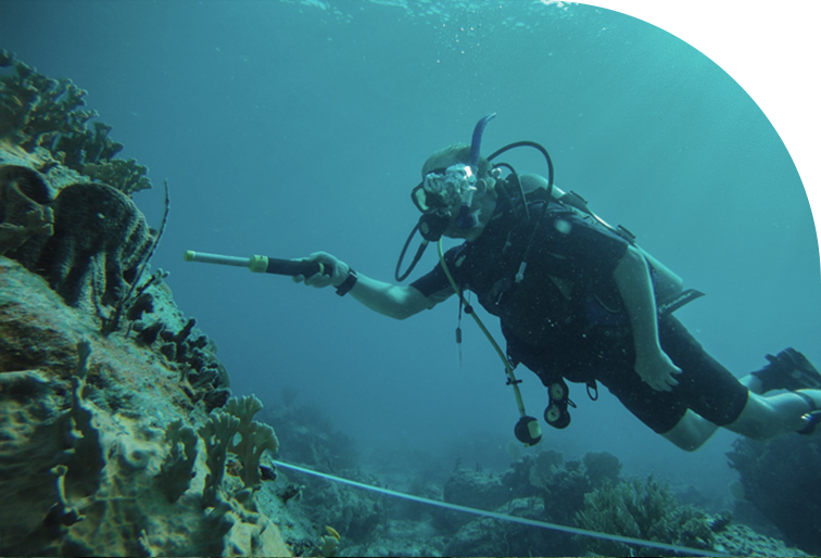 someone scuba diving and probing at a coral reef